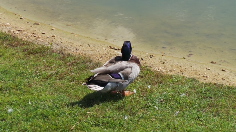 A Moment In Time: By The Pond